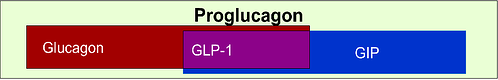 Simplified schematic overview of the glucagon superfamily of peptides