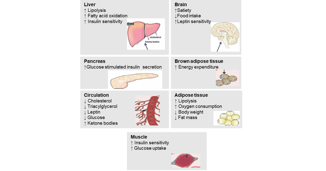 Targeting the incretin/glucagon system: a glimmer of hope