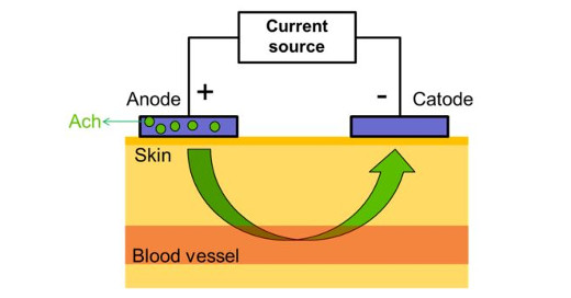 Applications of iontophoresis in studies investigating microvasculature
